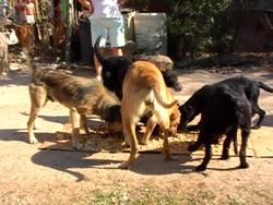 Otra vista del improvisado banquete canino